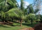 Beautiful property in costa rica